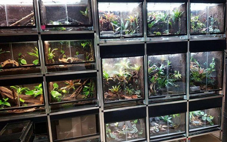 Frog Room by Ricarda Katharina P.