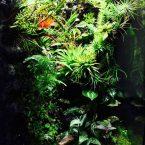 M-rainforest terrarium
