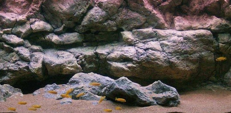 Tutorial costruzione sfondo roccioso acquario/terrario