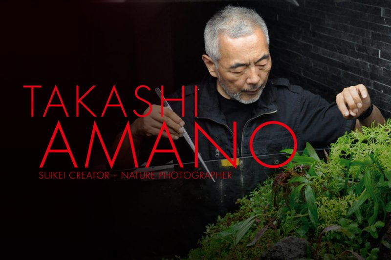 TRIBUTE TO TAKASHI AMANO ACQUASCAPING (VIDEO) – IN MEMORY