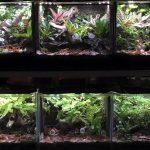 Frog Room – Dendrobates.pl.