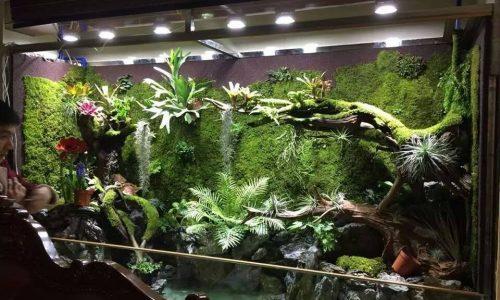 Terrarium – 自然叔的鸟窝