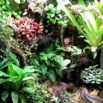 ExoTerra tropical 45x45x60 – David Caro Aguilera