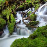 Aquascapingland: Inspiration by Natur…