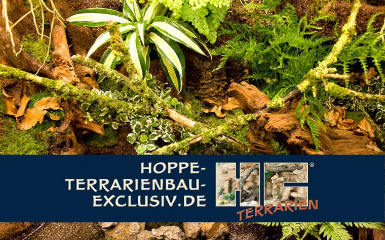 Hoppe-Terrarienbau-Exclusiv (video)