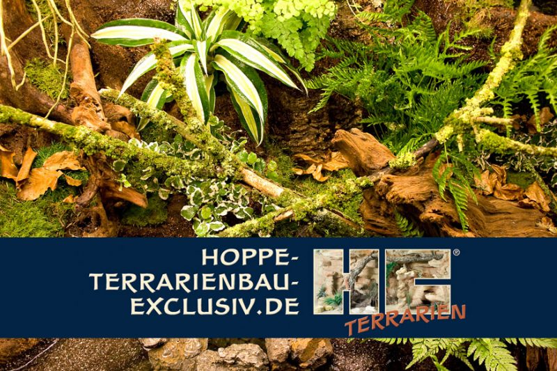 Hoppe-Terrarienbau-Exclusiv (video)