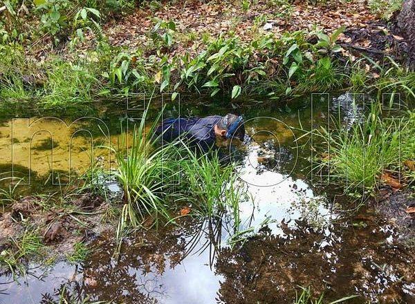 Natural acquascaping – AquariuManiak Amazon: Ivan Mikolji