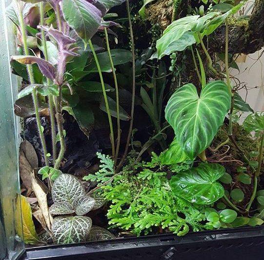 Frog room – Paul Pruitt.
