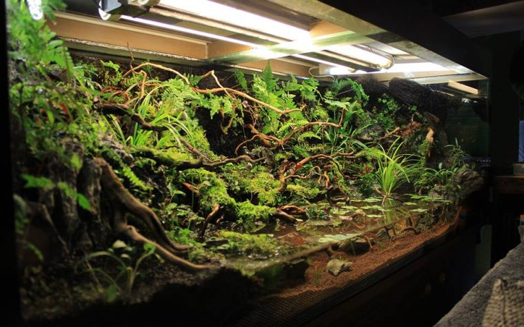 Paludarium – The Secret Garden – SZ