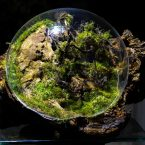 Astronaut style – Terrarium by Spyder-Tank