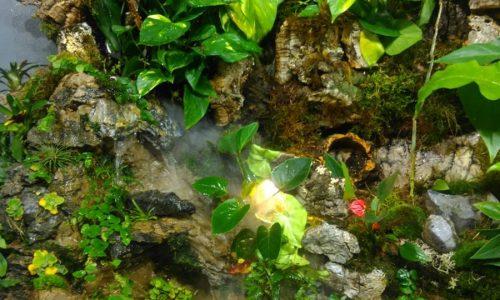 Terrarium plants by Gady-Gady