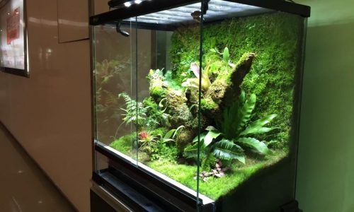 Frog Room by  Dc Zhou.