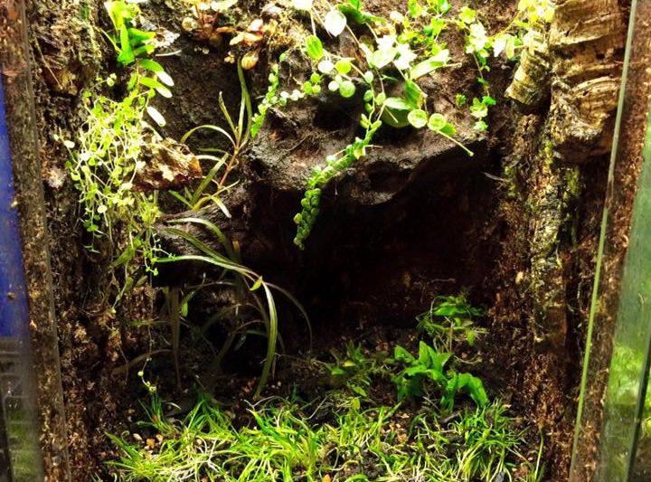 Terrarium by Jungle Juwel Exotics