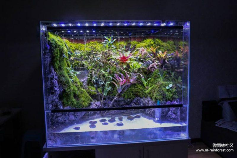 M-rainforest: 小唐的雨林世界(三):我的世界.