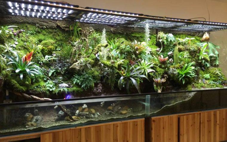 Paludarium by M-rainforest 毒物,4米雨林缸