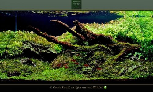 Aquascaping: layout Amazzonia (video)