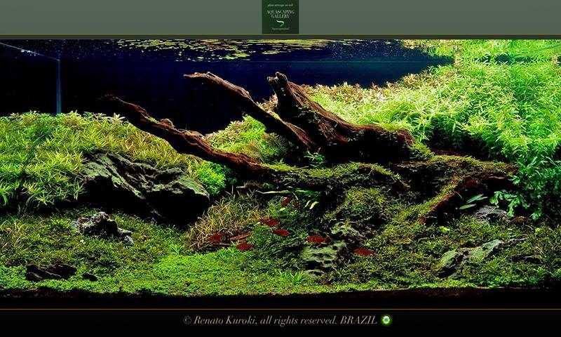 Aquascaping: layout Amazzonia (video)