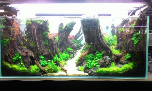Nanfeng Cup 6th China Aquascaping Contest First Shots – photo Andy Chen