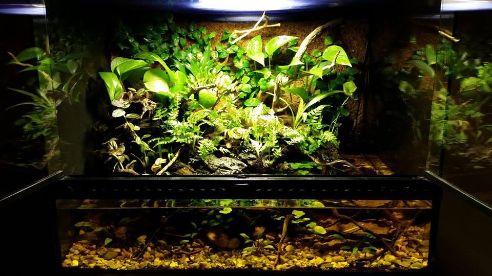 Illuminazione terrario u2013 sistemi e alternative