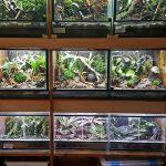Frog-room – Eduardo Aguilera
