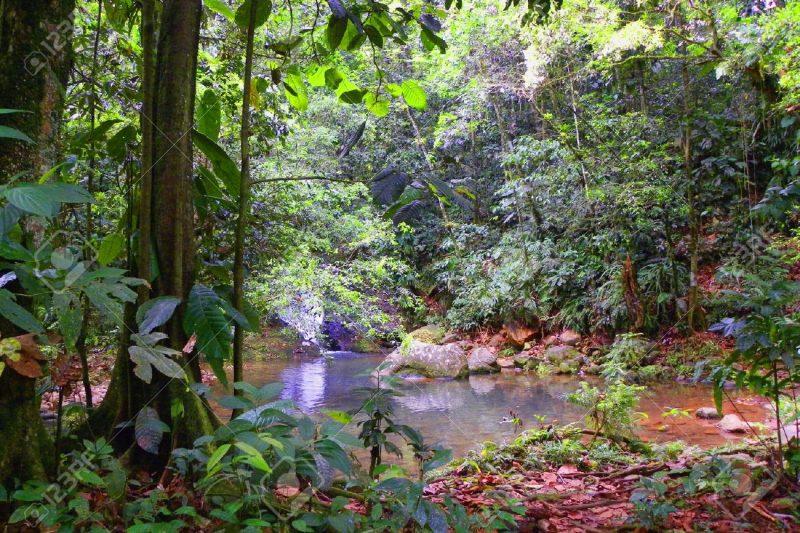 COSA SONO LE FORESTE PLUVIALI