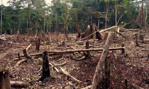 PERCHE' LE FORESTE TROPICALI VENGONO DISTRUTTE?