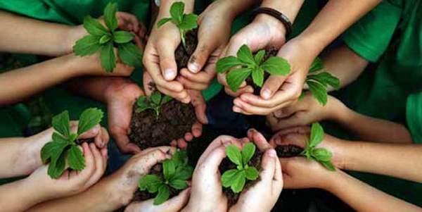 COME POSSIAMO SALVARE LE FORESTE PLUVIALI?