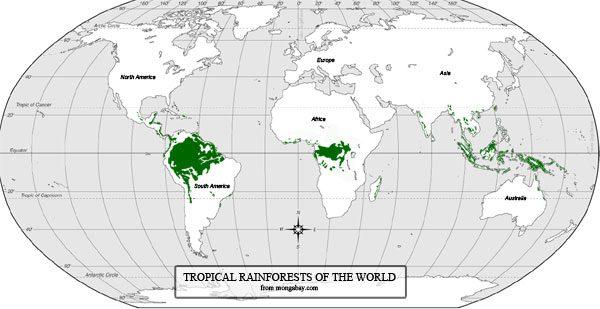 DOVE SONO SITUATE LE FORESTE PLUVIALI