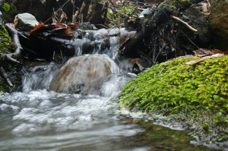 Terrarium home made – waterfall (video)