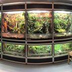 Frog Room by Ralph Zepfel