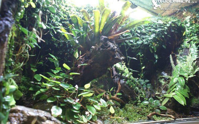03.12.2016 Terrarien Zuwachs – Froschmichl