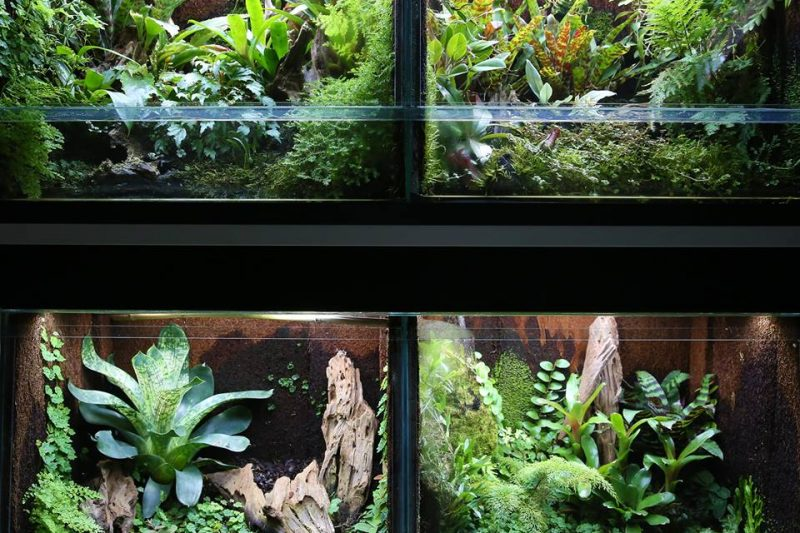 Terrarium Rack by Rob van Mourick