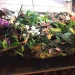 Orchidario – Jonathan Zelori