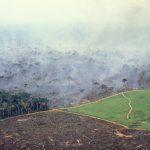 L'Amazzonia è sempre più spoglia, in crescita la deforestazione