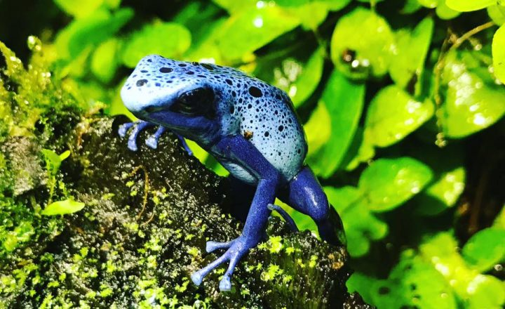 How to Build a Poison Frog Terrarium