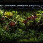 M-rainforest 幽谷 by 咖啡有毒