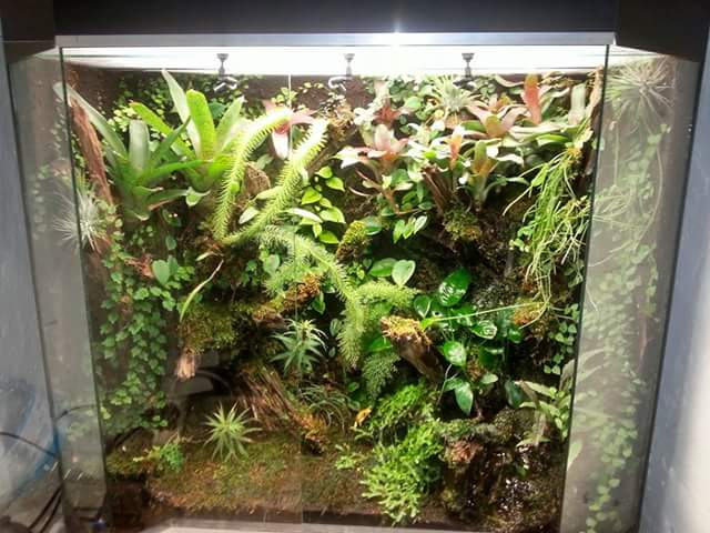 How To Set Up A Living Vivarium For Poison Dart Frogs