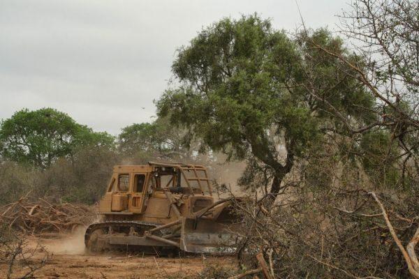 La deforestación más grande del planeta se da en el Chaco Paraguayo