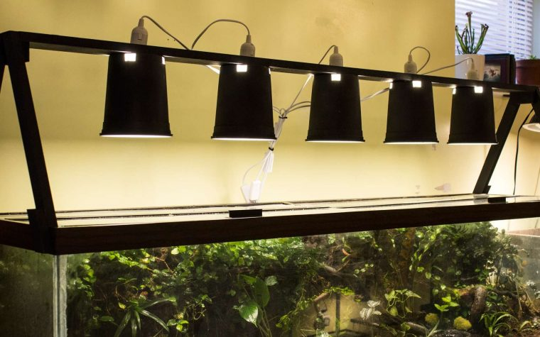 ILLUMINAZIONE TERRARIO – Un'idea originale (Video)