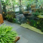 Paludario:  Teich Aquarium im Wohnzimmer