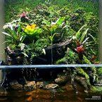 Paludarium – M-rainforest rapbb
