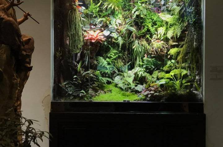 Terrarium & Paludarium – Dc Zhou (Cina)