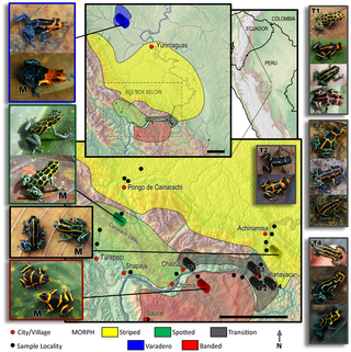 Phenotypic and Genetic Divergence among Poison Frog Populations in a Mimetic Radiation.