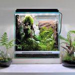 Rainforest test artistic works – Simon Chiu