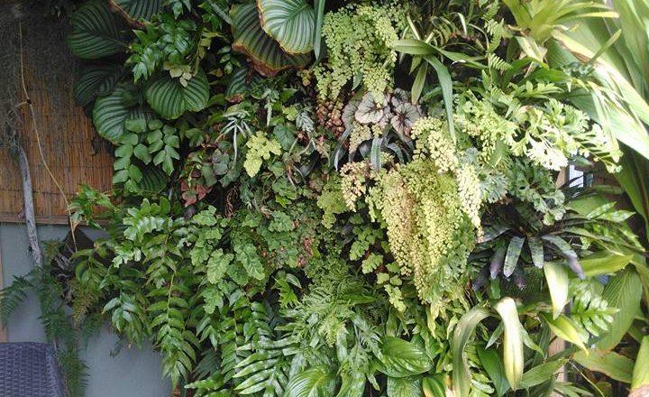 Giardino verticale – Raymond Chin