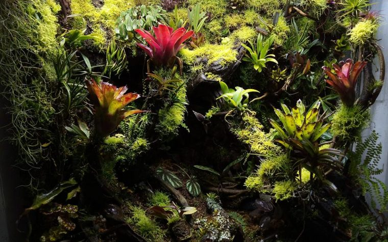 李澜涛 – Vivarium Terrarium Plants