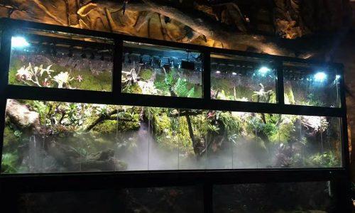 M-rainforest: 万木森.