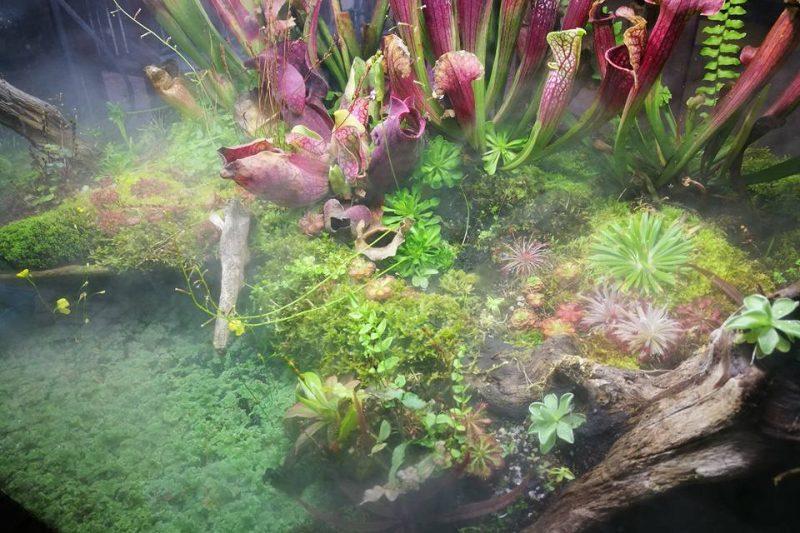 Robin Tan – Terrarium cloud forest- piante carnivore