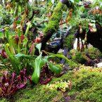 Orto Botanico di Shenzhen – Giardino botanico paesaggistico insettivoro