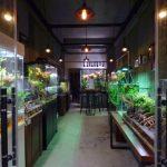 Frog Room Terrarrium – 准备迎客。欢迎光临。- Chengdu, Sichuan, Cina
